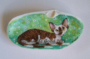Clam shell choc and white Devon Rex cprt