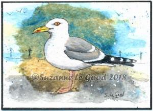 Herring Gull cprt