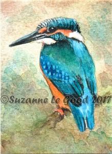Kingfisher cprt