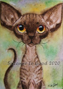 chocolate smoke Devon Rex 2 cprt
